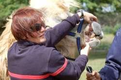 Florence Ollivet-Courtois explique les dangers d'une morsure de chameau